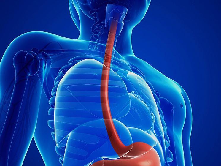 Bruciore all 39 esofago dolori di pancia bruciore stomaco for Bruciore alla schiena in alto