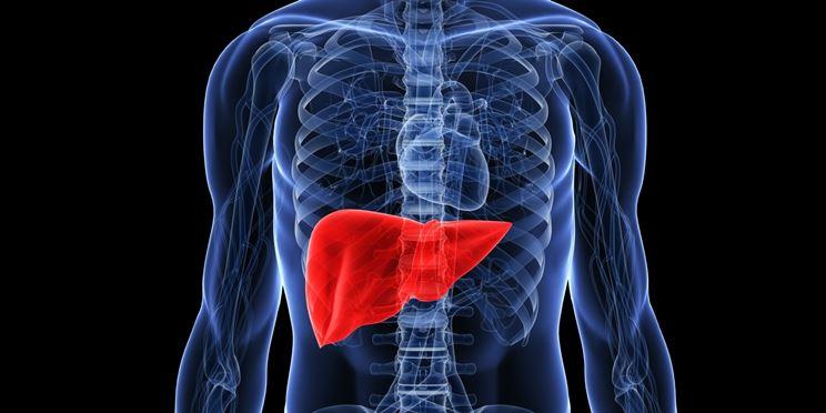 Collocazione del fegato