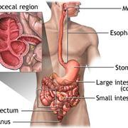 Sezione del corpo umano