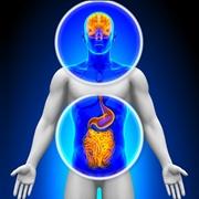 Cervello ed intestino sono collegati