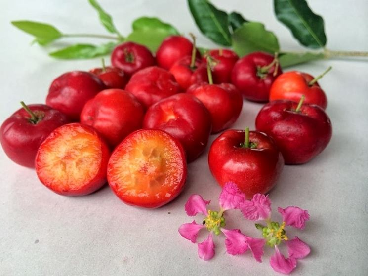 acerola frutto