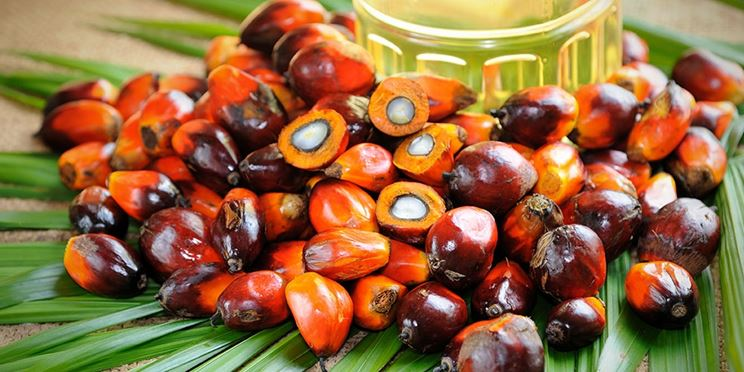 Frutti olio palma