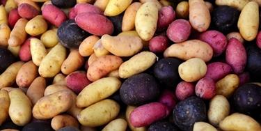 Alcune varietà di patate esistenti