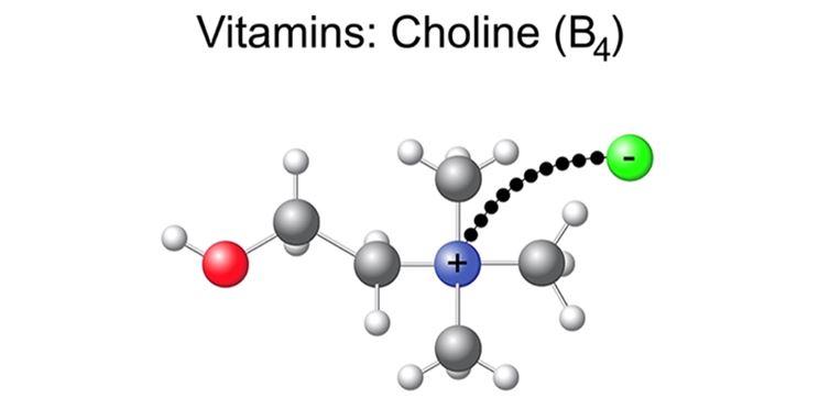 struttura chimica della Colina