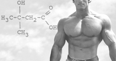 Gli integratori a base di hmb aiutano a migliorare il tono muscolare.  fonte http://standstronghealth.com