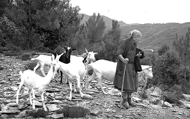 Da sempre le capre hanno caratterizzato le zone montane