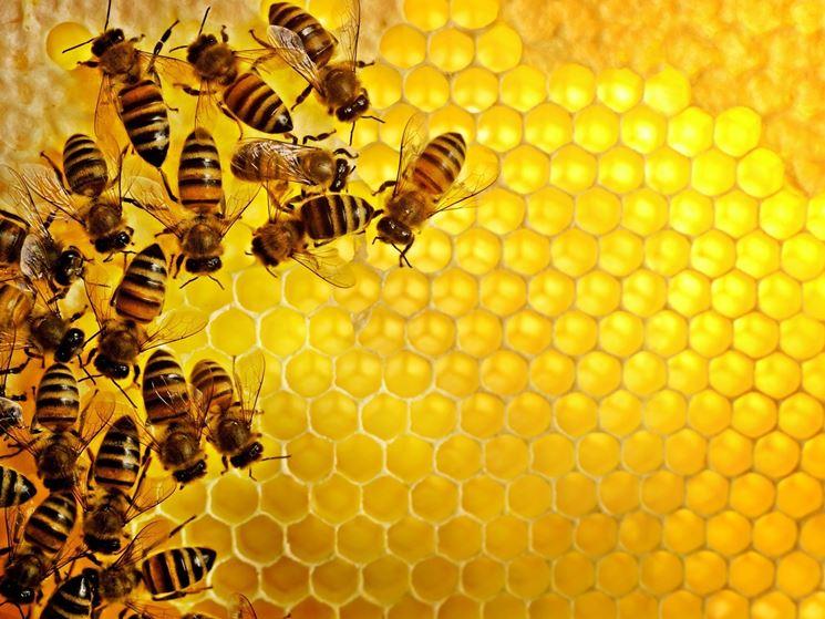 Pappa reale prodotta api