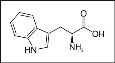 La struttura molecolare del triptofano  fonte http://elitenootropics.com
