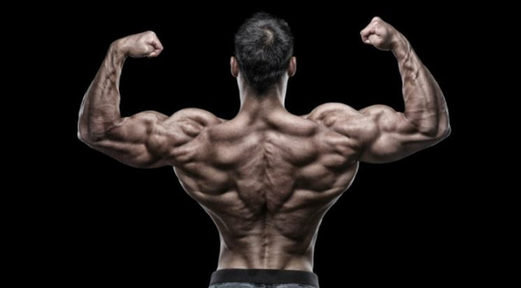Cisteina e muscoli