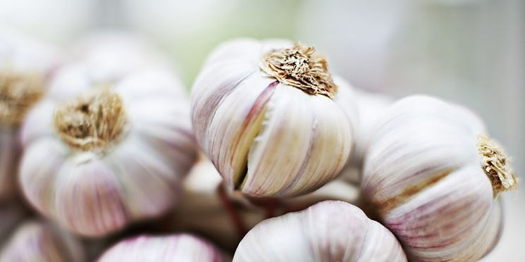 L'aglio contiene MSM
