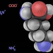 struttura aminoacido