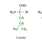 catene aminoacidi bcaa