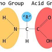 aminoacidi non essenziali