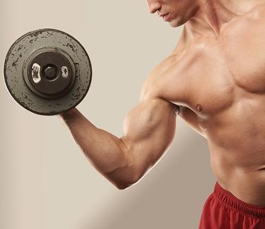 muscoli braccia