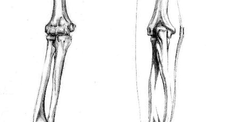 Illustrazione ossa braccio