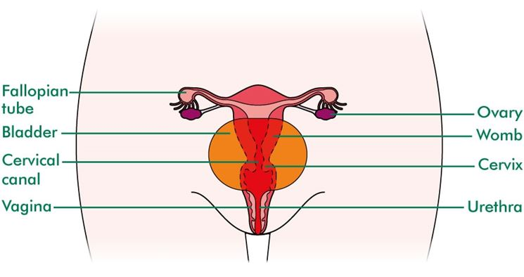 Bruciore genitali