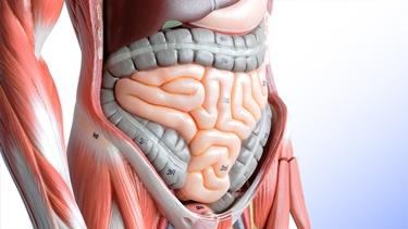 stomaco intestino e fegato