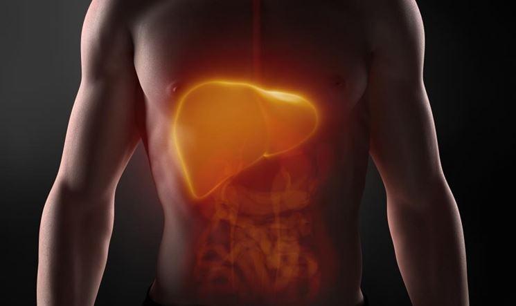 Fegato corpo umano