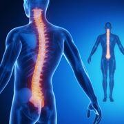 Colonna vertebrale e curve fisiologiche