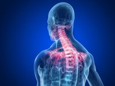 vertebre cervicali evidenziate