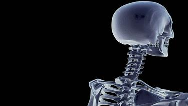 struttura delle vertebre cervicali