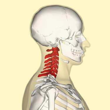 Colonna vertebrale cervicale