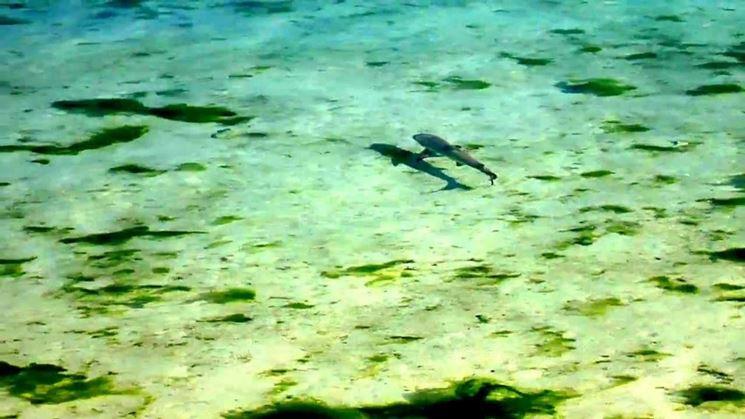 Oceano in cui si sviluppano le alghe