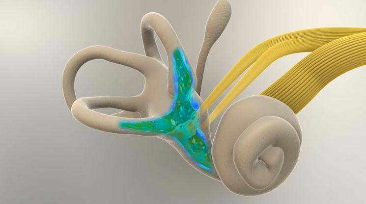 Struttura del labirinto interno orecchio