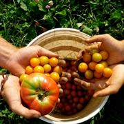 L'alimentazione biologica prevede l'uso di cibo coltivato in modalità bio