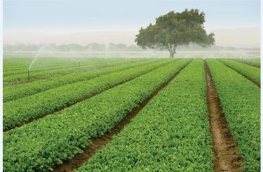 L'alimentazione biologica usa cibo coltivato in fattorie dove si rispettano l'ambiente, gli animali e l'uomo
