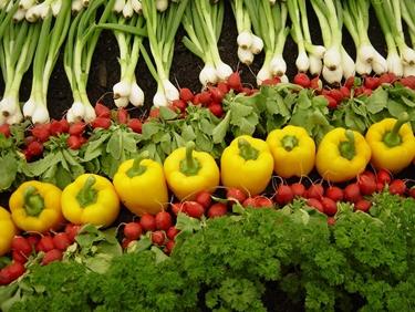 L'alimentazione bio prevede l'uso di alimenti coltivati senza pesticidi, antibiotici o insetticidi.