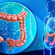 Posizione e struttura del colon