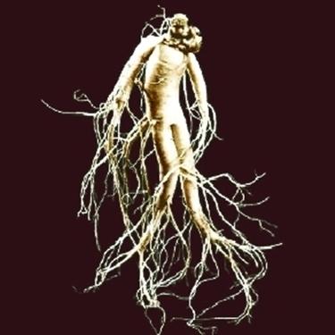 radice di ginseng
