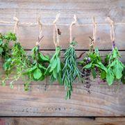 erbe per perdere peso