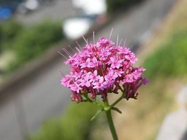 fiore della pianta