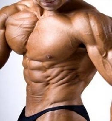 muscolatura