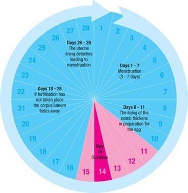schema ciclo regolare