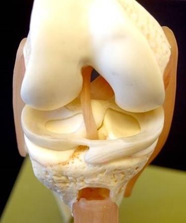 menisco struttura