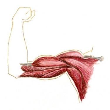 contrazione muscolare