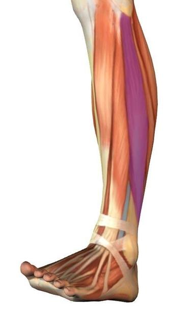 come allenare i muscoli