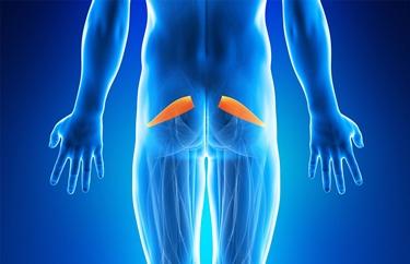 Localizzazione del muscolo piriforme