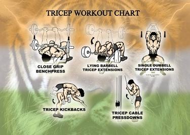 Esercizi base per i tricipiti