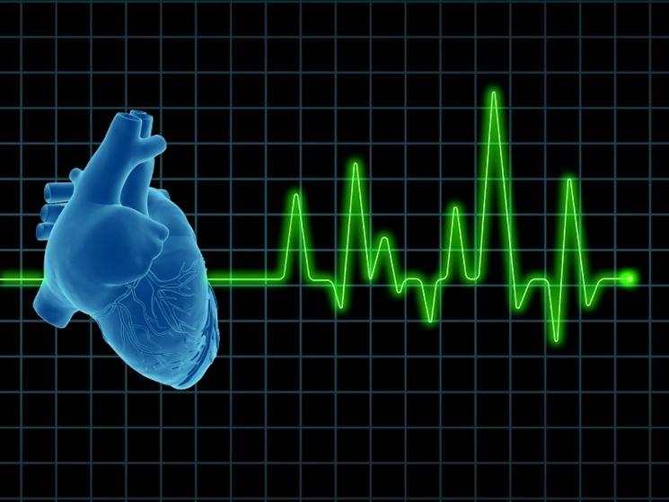 Il cuore e il ritmo cardiaco