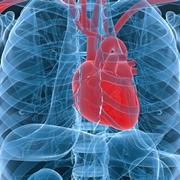Le arterie coronarie del cuore