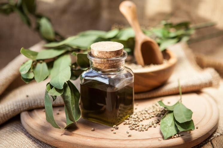 Olio di canapa con omega3
