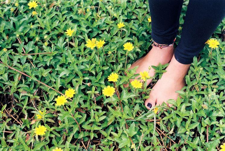 L'importanza della riflessologia del piede