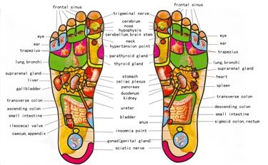 Mappa dei punti riflessi sulla pianta del piede<p />