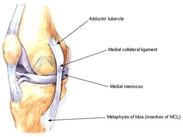 Legamento e menisco del ginocchio