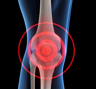 struttura del ginocchio
