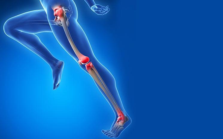 Articolazioni gambe